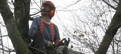 Tree Surgeons, Cheadle, Cheadle Hulme, Bramhall, Heald Green, Wilmslow, Stockport
